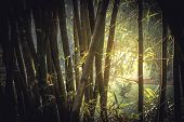 Bamboo tropical rainforest background with enlightenment sunlight through lush foliage vintage style poster