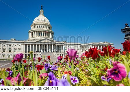 View Of The United States Capitol Building Home Of The Usa Congress Through Colorful Flowers In Wash