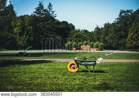 Metal Garden Wheelbarrow On The Grass In The Garden For Cleaning The Territory. Gardening Concept