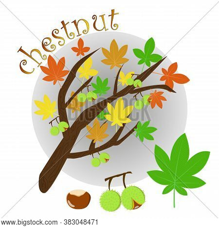Tree Branch With Autumn Leaves And Chestnut