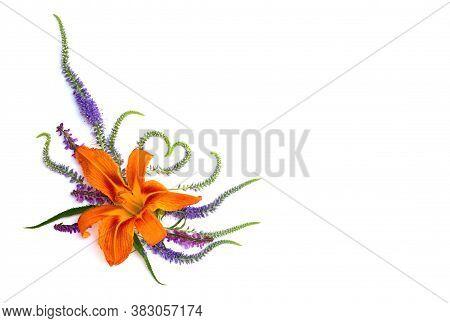 Flower Hemerocallis Fulva (orange Day-lily, Tawny Daylily, Tiger Daylily, Fulvous Daylily, Ditch Lil