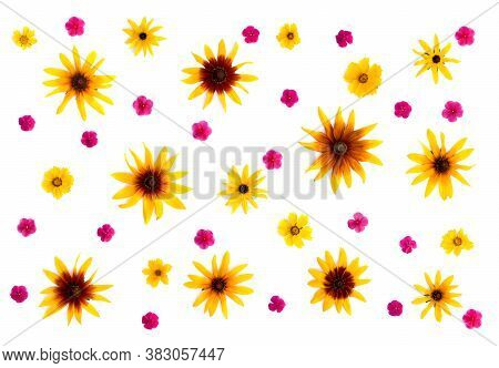 Wildflowers: Rudbeckia (rudbeckia Hirta, Coneflowers And Black-eyed-susans), Coreopsis Lanceolata (c