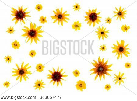 Flowers: Rudbeckia (rudbeckia Hirta, Coneflowers And Black-eyed-susans) And Coreopsis Lanceolata (ca