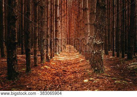 The Road In The Dark Pine Forest In The Distance. A Passage Through The Trees.
