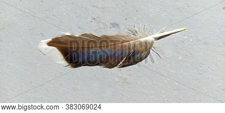 Bird Feather On A Light Background. A Brown Feather With A Zeo-blue Tint Of Color, Visible Under Sun