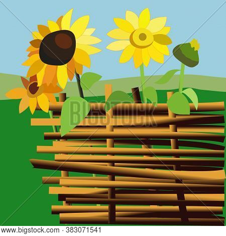 Background With Fence Peasant And Sunflowers, For Different Design