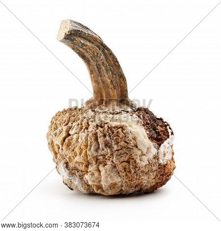 Rotten Pumpkin Isolated On White Background, Halloween Concept