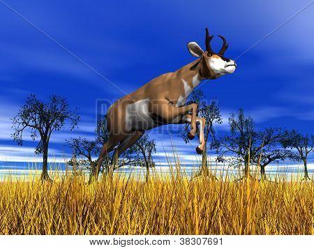 Pronghorn Antelope Jumping