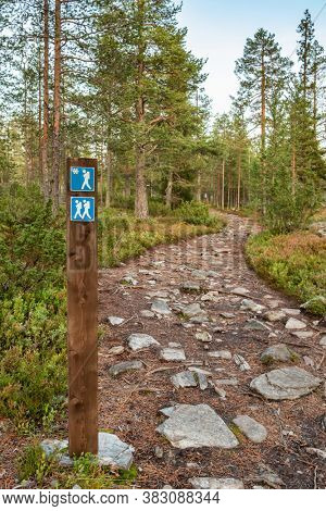 A small hiking trail path through an old pine grove in Finland. Hiking sign on the trail path