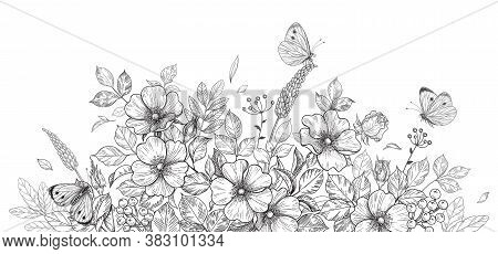 Hand Drawn Wildflowers, Dog-rose And Butterflies On Blank Background. Black And White Flowers And In