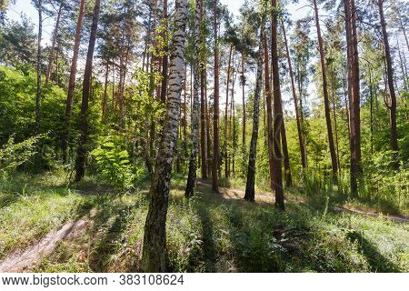 Fragment Of The Mixed Deciduous And Coniferous Forest, Footpath Among The Trees In Backlight At Summ