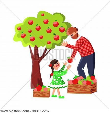 Man And Girl Harvesting Apples In Orchard Vector