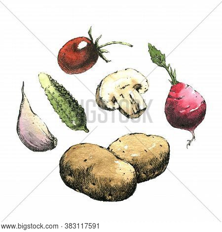 Hand-drawn Watercolor Image Of Vegetables. Jpeg Only