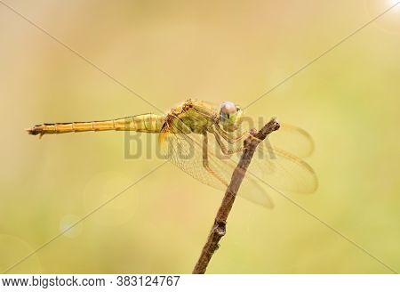 Close Up Detail Of Dragonfly. Dragonfly Image Is Wild With Blur Background. Dragonfly Isolated. Drag