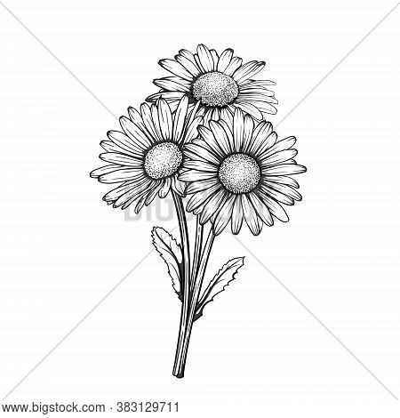 Beautiful Monochrome, Black And White Daisy Bouquet Flowers Isolated. For Greeting Cards And Invitat