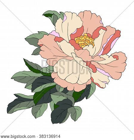 Drawing Of A Flower Of A Pion In Bright Colors, Vector Illustration, Isolate On A White Background