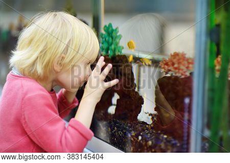 Preschooler Boy Watching Fishes In The Aquarium In Pet Shop. Inquisitive Child Explore Underwater Li