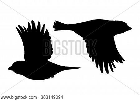 Realistic Sparrows Flying. Monochrome Vector Illustration Of Black Silhouettes Of Little Birds Sparr