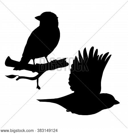 Realistic Sparrows Sitting And Flying. Monochrome Vector Illustration Of Black Silhouettes Of Little