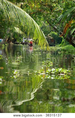 Palm Tree Tropical Forest In Backwater Of Kochin, Kerala, India