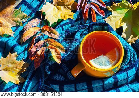 Autumn background - cup of tea, warm scarf and dry autumn leaves under soft sunlight. Autumn indoor background. Concept of spending autumn time at cozy home. Autumn composition, colorful autumn still life