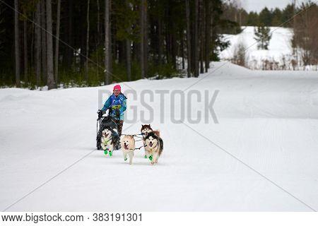 Verkhoshizhemye, Russia - 03.07.2020 - Husky Sled Dog Racing. Koltco Fortuny - Winter Dog Sport Sled