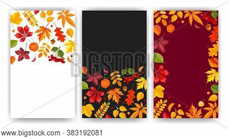 Fall Backgrounds Set. Layouts With Bright Autumn Leaves, Frame, Place For Text. Festive Design For T