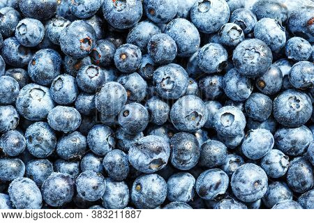 Water Drops On Ripe Sweet Blueberry. Fresh Blueberries Background With Copy Space For Your Text. Veg