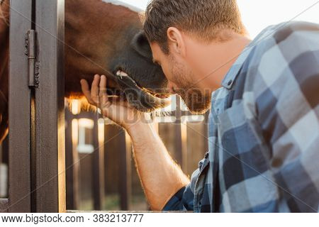 Selective Focus Of Rancher Leaning On Horse Head Near Corral Fence