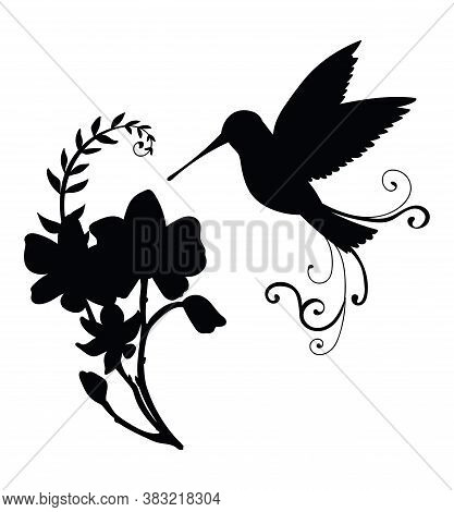 Vector Template Colibri Bird And Decorative Flowers. Black Silhouette Illustration Isolated On White