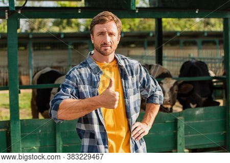 Rancher In Plaid Shirt Standing With Hand On Hip, Showing Thumb Up And Looking At Camera Near Cowshe