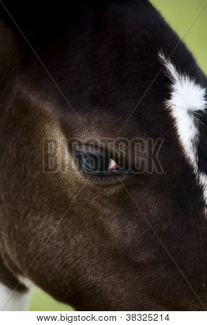 Horse mare Saskatchewan Field close up photo poster