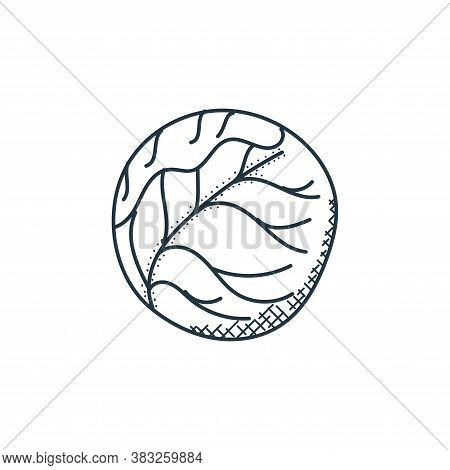 cabbage icon isolated on white background from food collection. cabbage icon trendy and modern cabba
