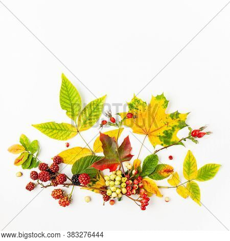 Autumn composition made of leaves, berries on white background. Autumn concept for Thanksgiving day or for other holidays. Flat lay. copy spase