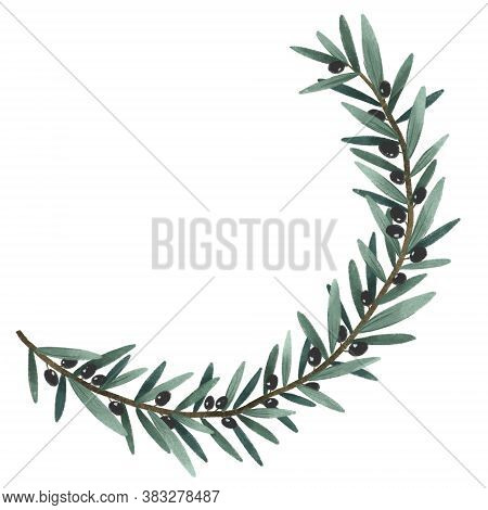 Olives Branch And Leaves, Green Herbal Set Organic Nature Illustration