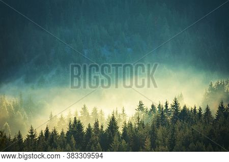 Forest Background. Rain, River, Green Forest Stream. Natural Environment. Nature Stream, Branches An