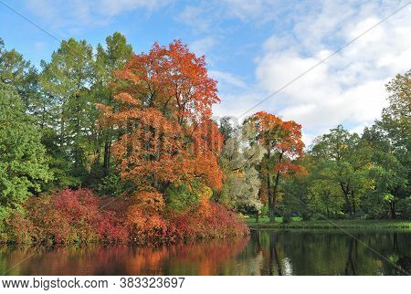 Very Beautiful Colorful Trees In The Autumnal Park