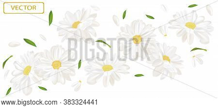 White Flower Chamomile With Green Leaf. Blooming Chamomile, Design For Cosmetic Product, Tea, Perfum