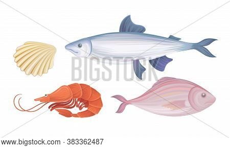 Shrimp And Fish As Seafood And Marine Delicacy Vector Set