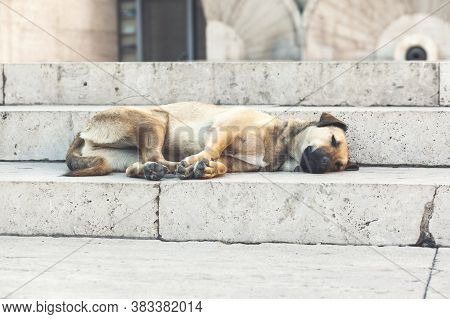 Dog Lying Down Taking A Nap On The Stairs.