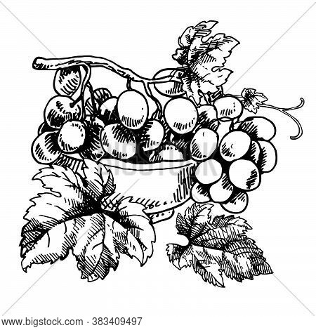 Hand Drawn Vector Illustration Of Bowl Of Grapes. Isolated Black Bunch Of Grapes, Grape Leaves On Wh