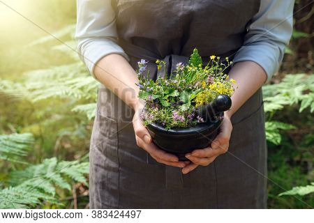Woman Holding In Her Hands A Mortar Of Medicinal Herbs. Herbalist Woman Gathering Healing Plants In
