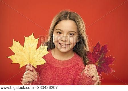 Natural Beauty. Happy Autumn Season. Red Or Yellow. Seasonal Change. Magic Colors. Amazing Autumn. L