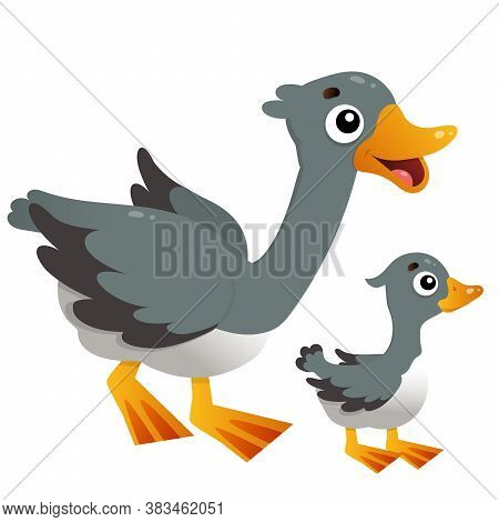 Color Image Of Cartoon Goose With Gosling On White Background. Farm Animals. Vector Illustration For