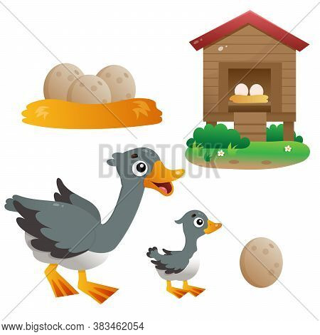 Color Images Of Cartoon Goose With Gosling On White Background. Farm Animals. Vector Set For Kids.