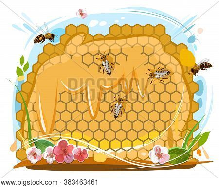 Bee Honeycomb. Bees Collect Nectar, Get Honey, Put It In Wax Cells. Vector Isolated Object On White