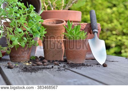 Group Of Terra Cotta Flower Pots And Succulent Plant On A Garden Table With Shovel