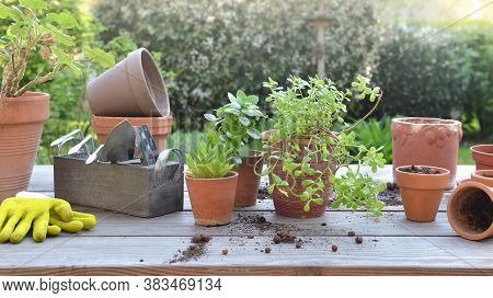 Potting Plant And Garden Equipment On A Table In A Garden