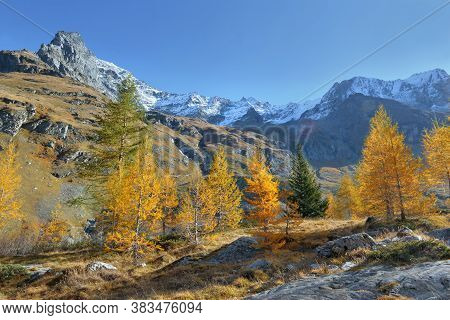 Autumnal Foliage Trees In A Beautiful Alpine Mountain Under Blue Sky