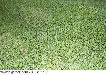 Green Lawn Is Growing In A Beautifully Designed Backyard, Mimicking Man-made Nature.